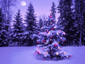 christmas_in_the_wilderness